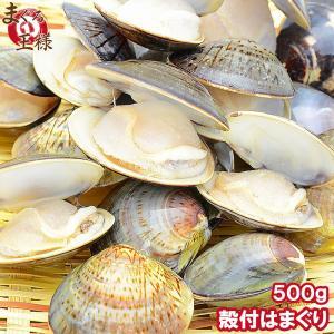 はまぐり ハマグリ 蛤 ボイル 500g