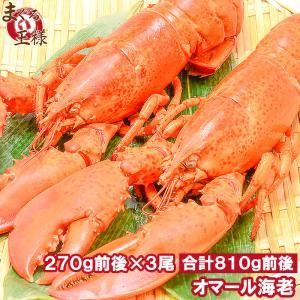 オマール海老ロブスター(冷凍重量270g×3尾)  肉厚なボイルロブスターが大特価  【ロブスター ...