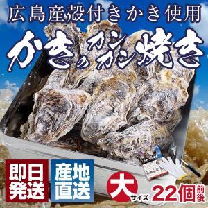 殻付き 牡蠣 カキ カンカン焼きセット 大粒 3kg 海鮮 バーベキュー かんかん焼き LLサイズ 20個〜23個入 3〜4人前  ガンガン焼き BBQ アウトドア 家キャン|maguro441
