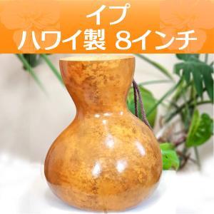 ハワイアン フラダンス 楽器 イプ ヘケ オレ 8インチタイプ (Mサイズ) 378g インテリア|mahalohana