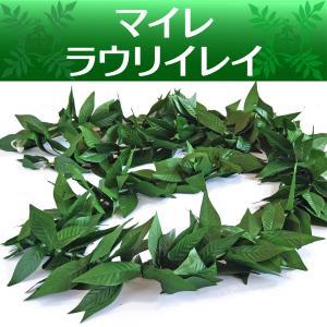 フラ マイレ ラウリイ ダブル レイ (グリーン 3トーン) 170cm ハワイ 男女兼用|mahalohana