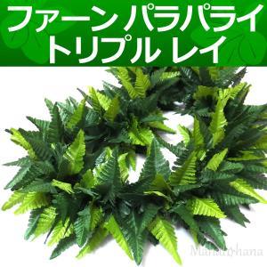 ハワイ語でクプクプと呼ばれるシダ (ファーン)は、フラにおいてもマイレと同じように幅広く親しまれてい...