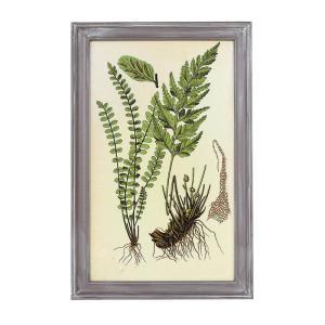商品説明 ボタニカルアートとも呼ばれる植物画。それは植物が生きていた時の状態を絵として保管する事が目...