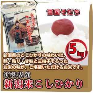 新潟県  新潟米 こしひかり 5kg  白米 通販 日本一のこめ処、新潟で育った美味しいお米 雪国そだち|mailife
