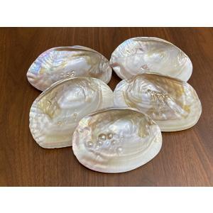 パールシェル イケチョウ貝 ホワイトセージ5gプレゼント トレイ 浄化 プレゼント インテリア 香皿 maimustone-y