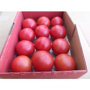 無農薬トマト 渥美産 ぜいたくトマト 「とまとのこころ」 1kg|mak