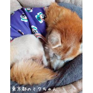 犬服 ドッグウェア 犬のタンクトップ M/Lサイズ(中型犬) DOGタンクトップ オリジナルプリント 狛犬OR寿 紫 メール便で送料無料(代引き不可) mamav