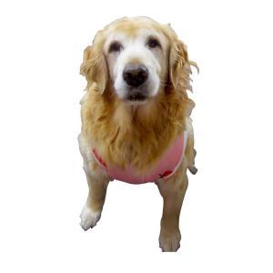 犬服 ドッグウェア 犬のタンクトップ M/Lサイズ(中型犬) DOGタンクトップ オリジナルプリント いちごちゃん メール便で送料無料(代金引換別途送料600円〜)|mamav|02