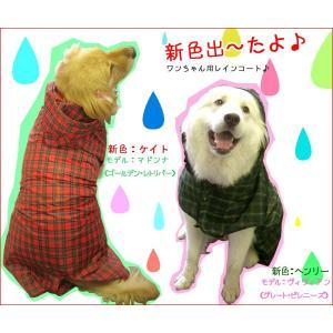 犬のレインコート 日本製! 超大型犬用レインコート(3Lサイズ) バーニーズサイズ しっぽスリット レターパック送料無料(代引き不可)|mamav