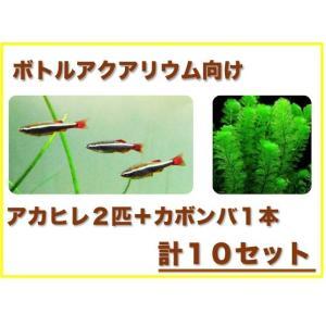 (ボトルアクアリウム向け)アカヒレ・水草セット 10組|mame-store