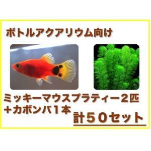 (ボトルアクアリウム向け)ミッキーマウスプラティー・水草セット 50組|mame-store