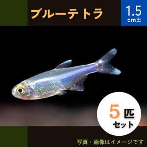 (熱帯魚・カラシン)ブルーテトラ SMサイズ 5匹|mame-store
