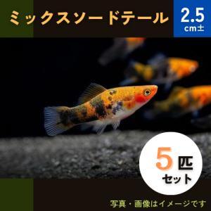 (熱帯魚・カダヤシ・メダカ)ミックスソードテール 5匹|mame-store