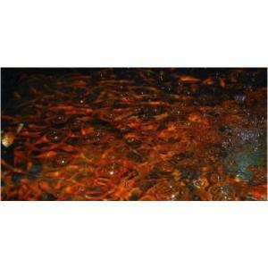 【研究用納品実績有り・金魚】 小赤 150匹|mame-store