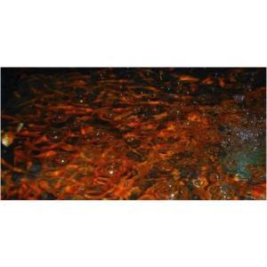 【研究用納品実績有り・金魚】 小赤 100匹|mame-store