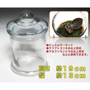 【宝石蘭・育成】Mサイズグラスボトル(標本瓶タイプ)|mame-store