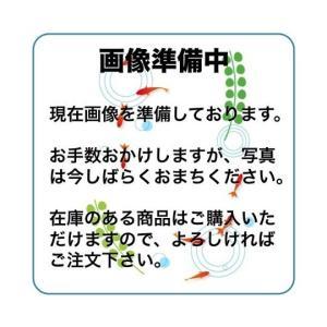 (琉金)だるま琉金 白黒 L 1匹|mame-store