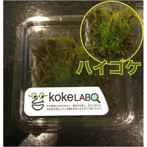【水草・モス・コケ】ハイゴケ(コケラボ) 1カップ|mame-store