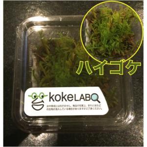 【水草・モス・コケ】ハイゴケ(コケラボ) 2カップ|mame-store