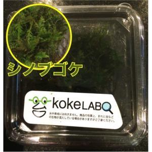 【水草・モス・コケ】シノブゴケ(コケラボ) 3カップ|mame-store