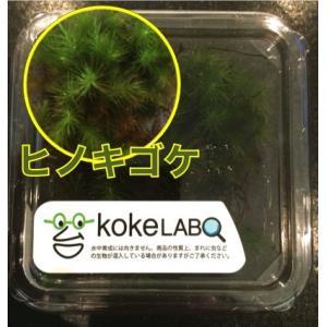 【水草・モス・コケ】ヒノキゴケ(コケラボ) 3カップ|mame-store