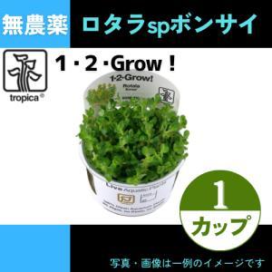 (Tropica・水草) ロタラSP ボンサイ 1・2・grow!(tropicaトロピカ) 1カップ|mame-store