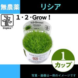 (Tropica・水草) ウォーターローン 1・2・grow!(tropicaトロピカ) 1カップ|mame-store
