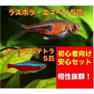 【初心者向け安心セット】ラスボラ・エスペイ5匹・カージナルテトラ5匹 セット|mame-store