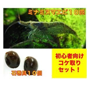 【初心者向け・コケ対策】ミナミヌマエビ10匹・石巻貝10個 セット(No.A−27)|mame-store