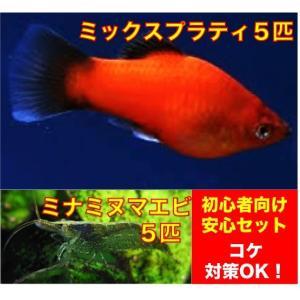 【初心者向け安心セット】ミックスプラティ5匹・ミナミヌマエビ5匹 セット(No.A−30)|mame-store