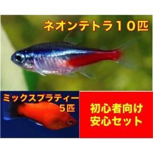 【初心者向け安心セット】ネオンテトラ10匹・ミックスプラティー5匹 セット(No.A−32)|mame-store