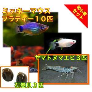 【初心者向け安心セット】ミッキーマウスプラティー10匹・ヤマトヌマエビ3匹・石巻貝3個 セット|mame-store