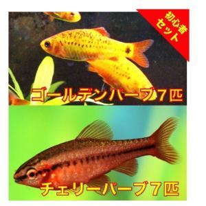 【初心者向け安心セット】ゴールデンバーブ7匹・チェリーバーブ7匹 セット(No.A−47)|mame-store