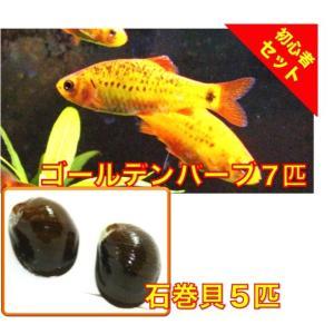 【初心者向け安心セット】ゴールデンバーブ7匹・石巻貝5匹 セット(No.A−48) mame-store