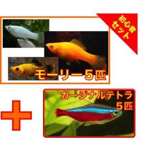【初心者向け安心セット】ミックスモーリー5匹・カージナルテトラ5匹 セット(No.A−53) mame-store