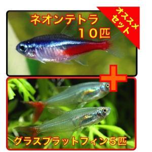 【初心者向け安心セット】ネオンテトラ10匹・グラスブラットフィン5匹 セット(No.A−60) mame-store