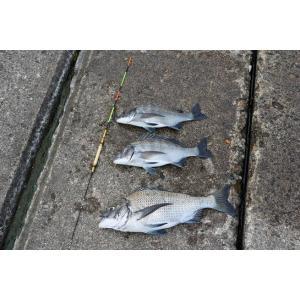 仙人うきダンゴ釣り用カヤうき 0.5号ロングII manboo-shop 05