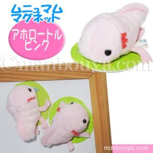 小さいかわいい海の生き物たちが人気のムニュマムシリーズ。 ウーパールーパー(メキシコサンショウウオ)...