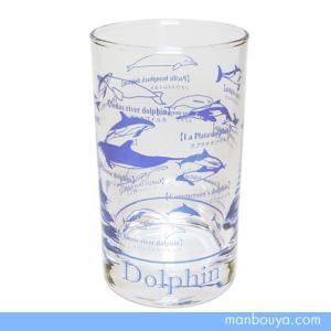 イルカグッズ グラス/ガラス製コップ サンセラ工芸 イルカ図鑑タンブラー|manbouya