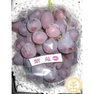 紫苑 1房 (800g位)(種なし)※ご予約は11月20頃までにお願いします。|mankasou