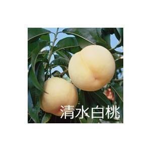 清水白桃 3玉(1玉300g)|mankasou