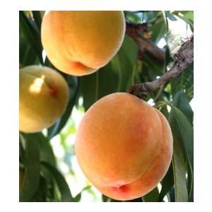 黄金桃 10玉入|mankasou