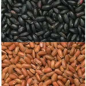 古代米 黒米と赤米のセット 各500g 投函便|manryo
