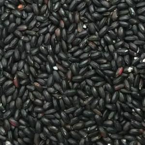 令和元年産 山梨県産 黒米 10kg|manryo