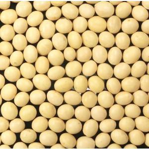 北海道産 大豆 500g (北海道産とよまさり)|manryo