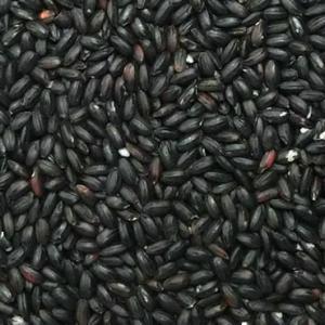 古代米 黒米 30kg (30年産 山梨県産)長期保存包装済み|manryo