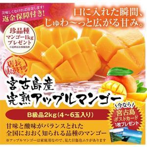 宮古島産アップルマンゴー 訳ありマンゴー<B品>2kg(4〜6玉入り)傷や色ムラ、大きさはバラバラです|mantenmiyakojima