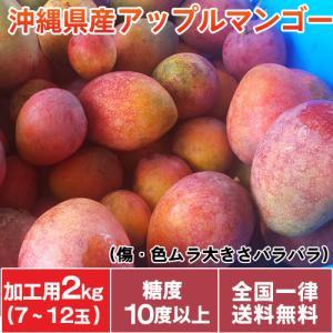 完熟マンゴー 規格外マンゴー 沖縄産 アップルマンゴー 加工用 マンゴー 2kg(6〜12玉入り)傷や色ムラあり 大きさバラバラ 送料無料|mantenmiyakojima