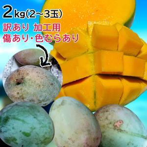 数量限定 キーツマンゴー 訳あり 加工用マンゴー 見た目悪い 2kg(2玉〜3玉入り)沖縄マンゴー 旧盆 傷や色ムラ 大きさバラバラ|mantenmiyakojima
