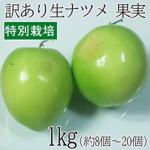 沖縄県産 特別栽培 果実 ナツメ なつめ 1kg(8個〜20個) フルーツ スーパーフード スーパーフルーツ|mantenmiyakojima